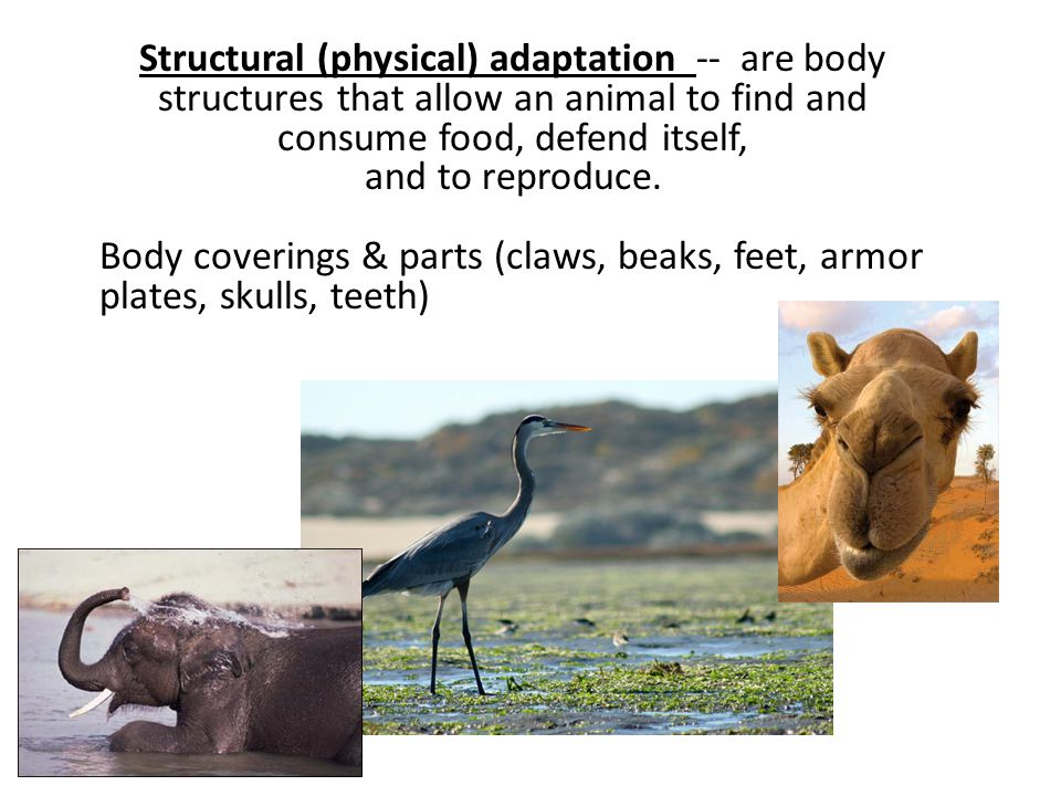 Structural (physical) adaptation -- are body structures that allow an animal to find and consume food, defend itself, and to reproduce. Body coverings