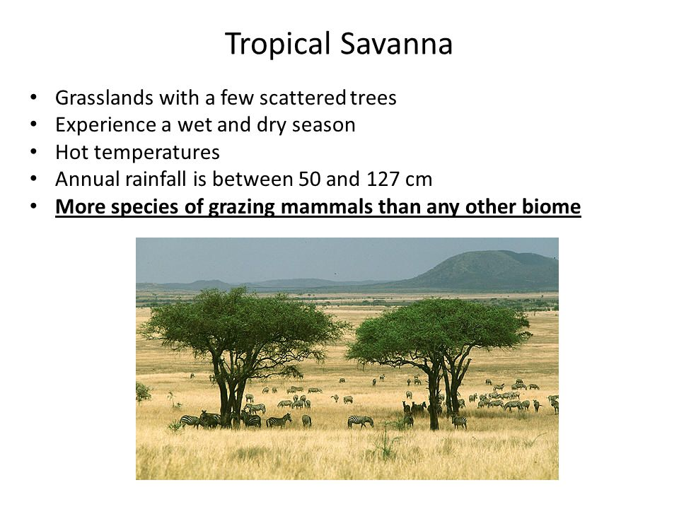 Tropical Savanna Grasslands with a few scattered trees Experience a wet and dry season Hot temperatures Annual rainfall is between 50 and 127 cm More