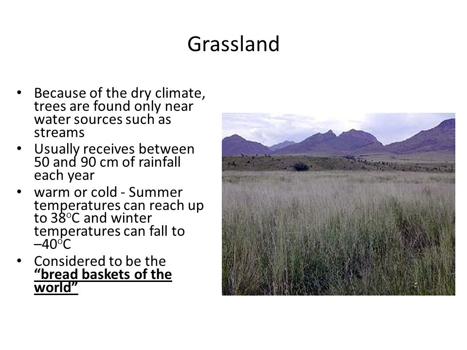 Grassland Because of the dry climate, trees are found only near water sources such as streams Usually receives between 50 and 90 cm of rainfall each y
