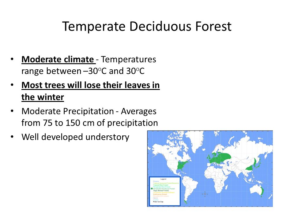 Temperate Deciduous Forest Moderate climate - Temperatures range between –30 o C and 30 o C Most trees will lose their leaves in the winter Moderate P