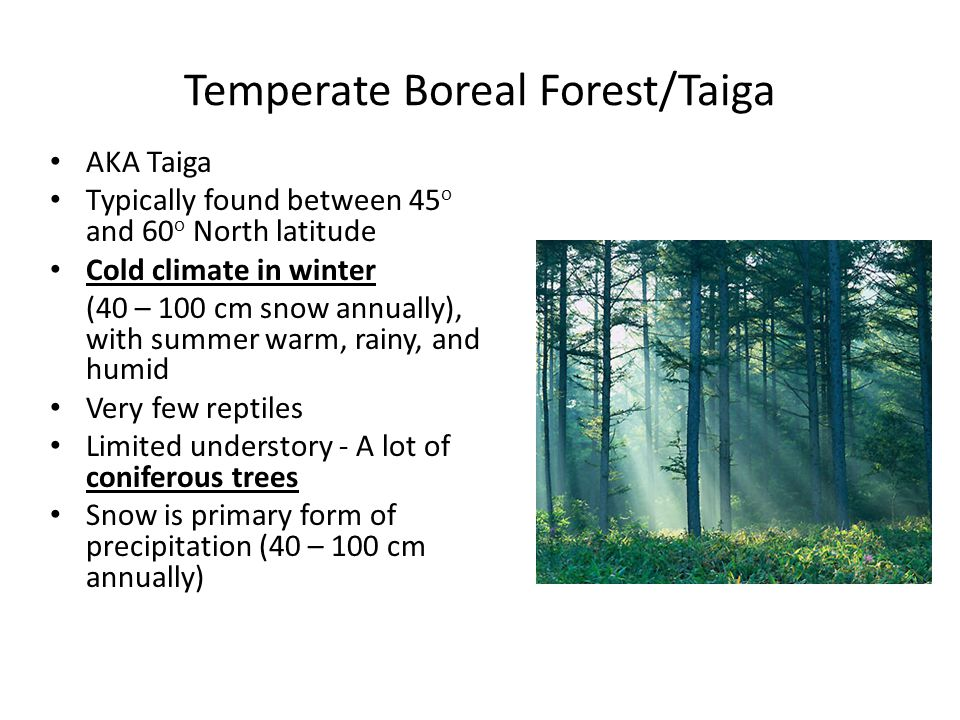 Temperate Boreal Forest/Taiga AKA Taiga Typically found between 45 o and 60 o North latitude Cold climate in winter (40 – 100 cm snow annually), with