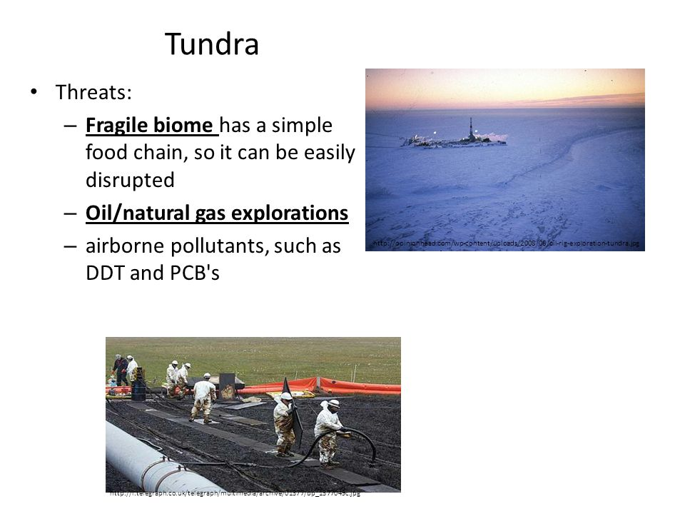 Tundra Threats: – Fragile biome has a simple food chain, so it can be easily disrupted – Oil/natural gas explorations – airborne pollutants, such as D