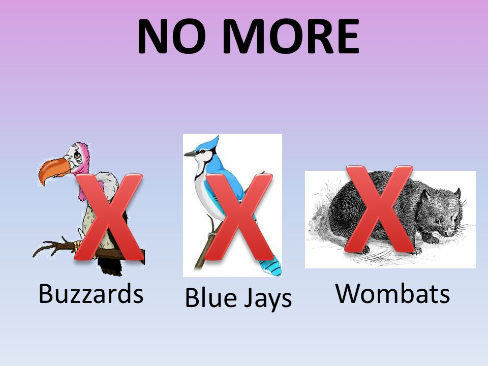 NO MORE Buzzards Blue Jays Wombats