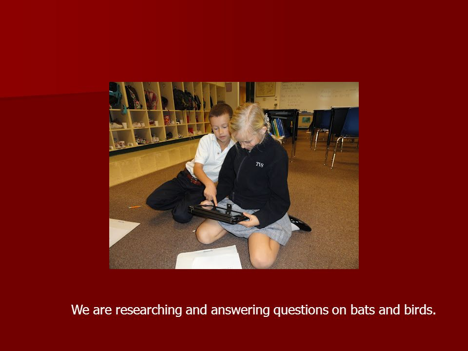 We are researching and answering questions on bats and birds.