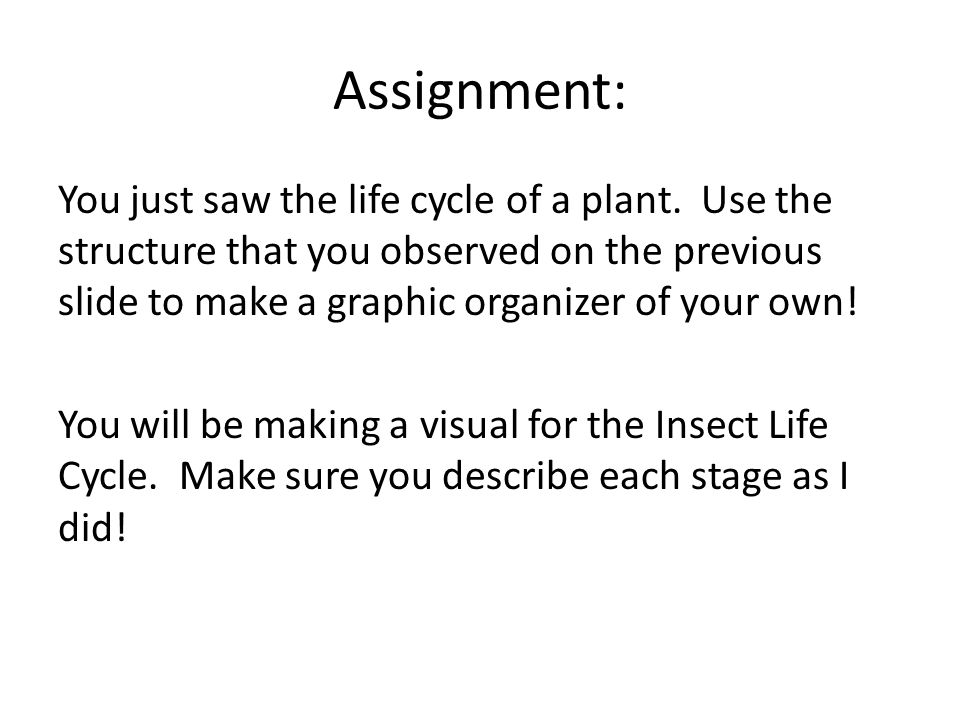 Assignment: You just saw the life cycle of a plant.
