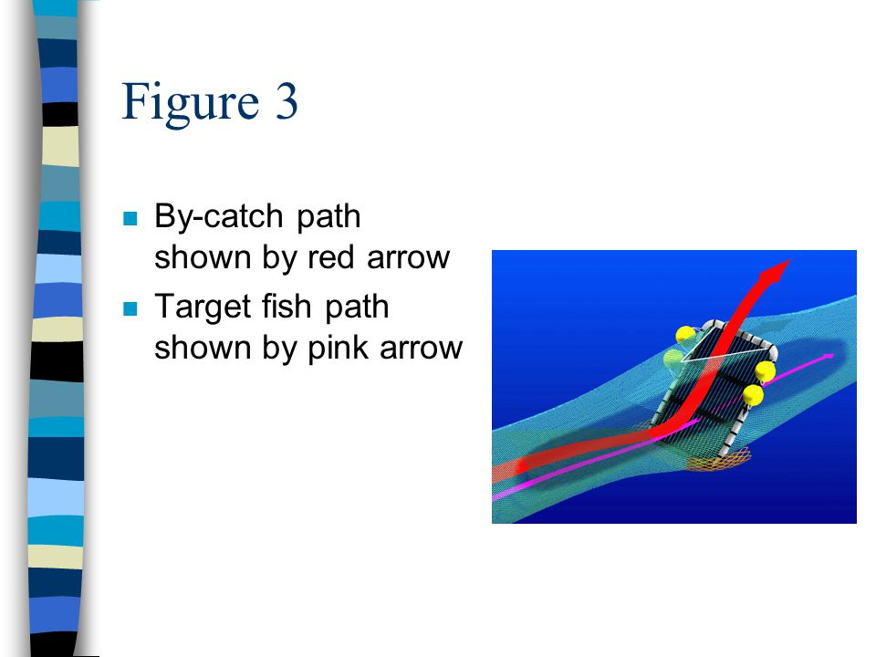 Figure 3 n By-catch path shown by red arrow n Target fish path shown by pink arrow