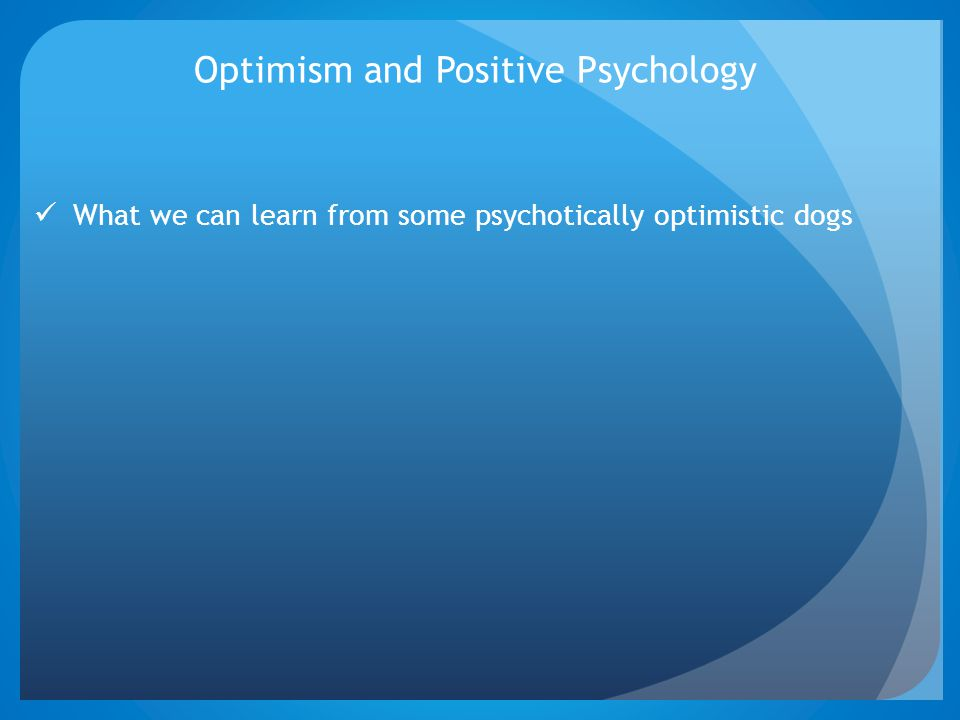 Optimism and Positive Psychology What we can learn from some psychotically optimistic dogs