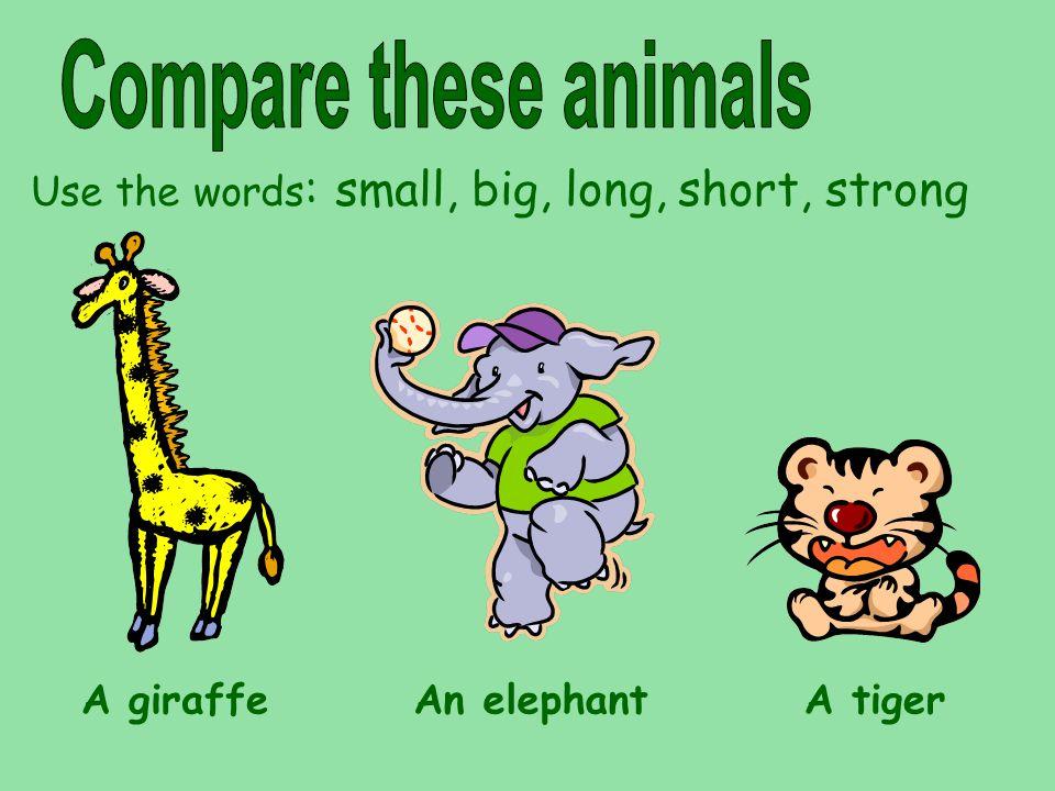 Use the words : small, big, long, short, strong A giraffeAn elephantA tiger