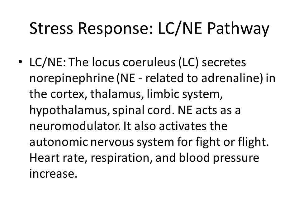 Stress Response: LC/NE Pathway LC/NE: The locus coeruleus (LC) secretes norepinephrine (NE - related to adrenaline) in the cortex, thalamus, limbic system, hypothalamus, spinal cord.