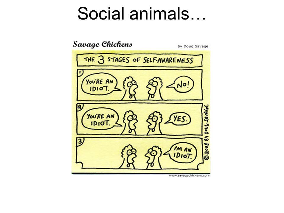 Social animals…