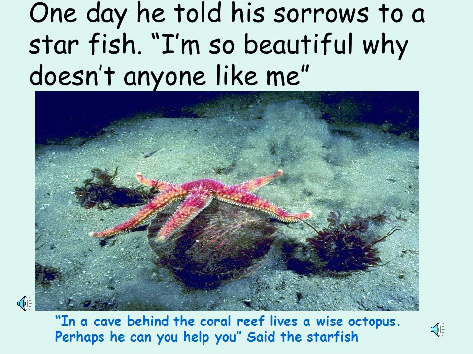 What use were Rainbow Fish's beautiful scales if nobody wanted to be with him. He was the loneliest fish in the ocean.