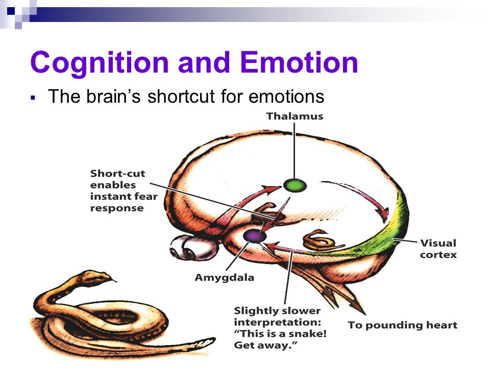 Cognition and Emotion  The brain's shortcut for emotions