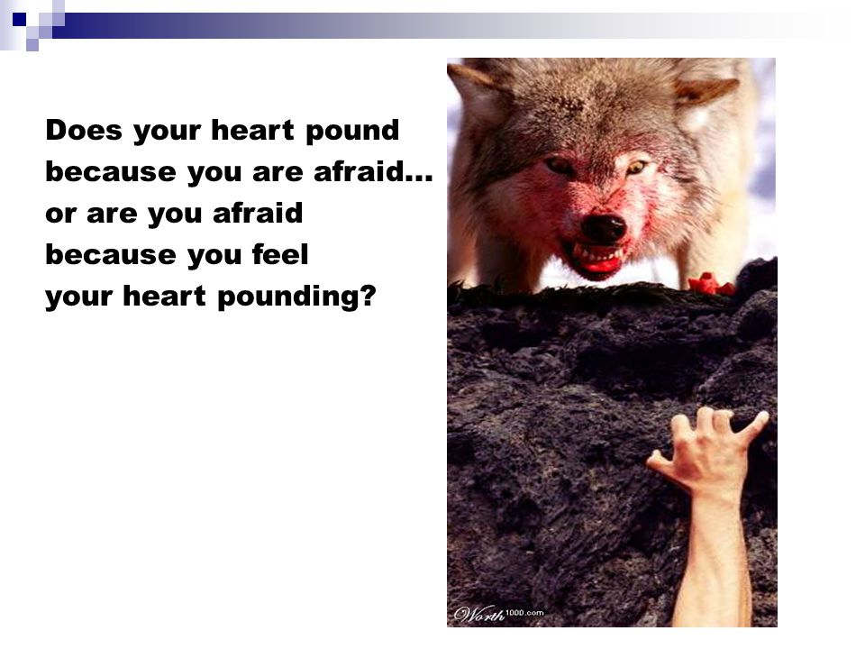 Does your heart pound because you are afraid... or are you afraid because you feel your heart pounding?