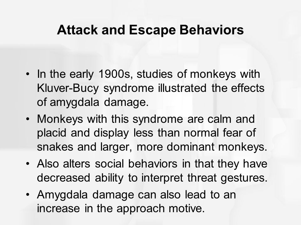 Attack and Escape Behaviors In the early 1900s, studies of monkeys with Kluver-Bucy syndrome illustrated the effects of amygdala damage.