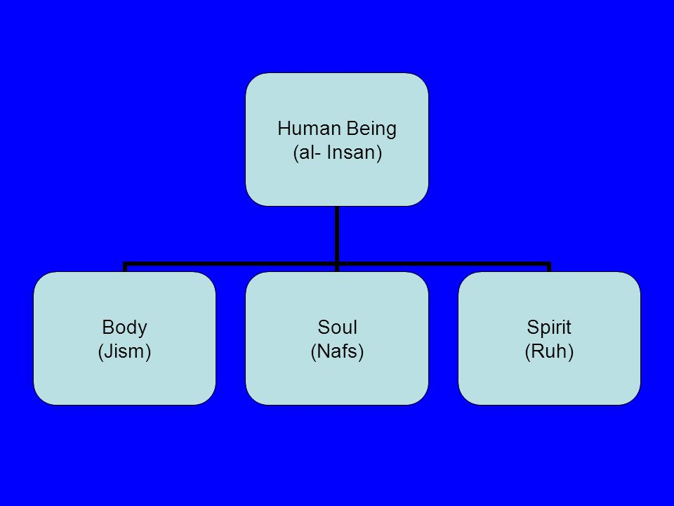 Human Being (al- Insan) Body (Jism) Soul (Nafs) Spirit (Ruh)