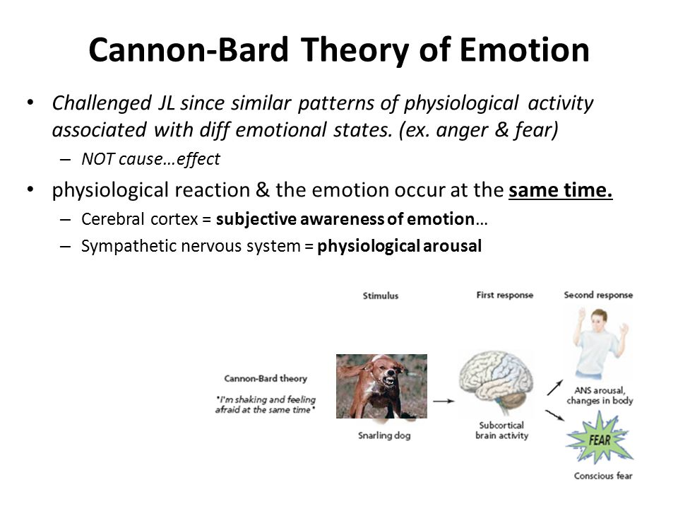 Cannon-Bard Theory of Emotion Challenged JL since similar patterns of physiological activity associated with diff emotional states. (ex. anger & fear)