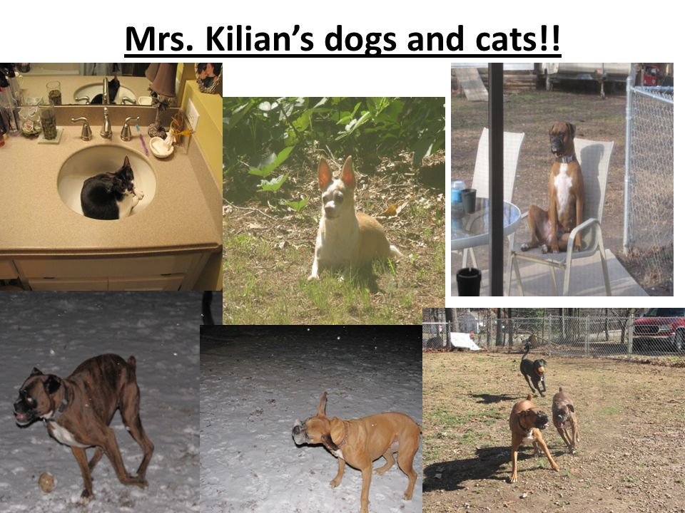 Mrs. Kilian's dogs and cats!!