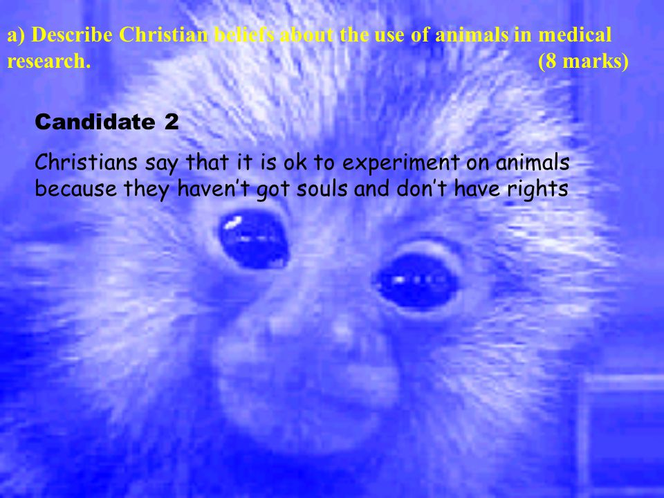 a) Describe Christian beliefs about the use of animals in medical research.(8 marks) Candidate 2 Christians say that it is ok to experiment on animals because they haven't got souls and don't have rights