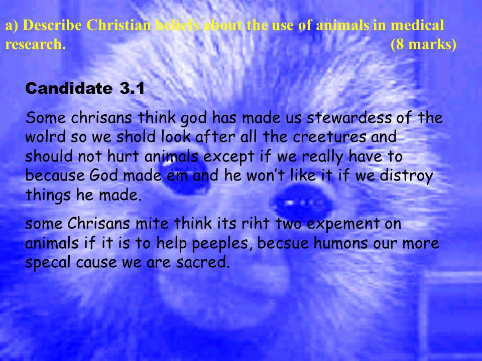 a) Describe Christian beliefs about the use of animals in medical research.(8 marks) Candidate 3.1 Some chrisans think god has made us stewardess of the wolrd so we shold look after all the creetures and should not hurt animals except if we really have to because God made em and he won't like it if we distroy things he made.