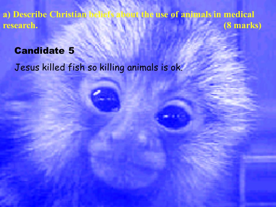 a) Describe Christian beliefs about the use of animals in medical research.(8 marks) Candidate 5 Jesus killed fish so killing animals is ok.