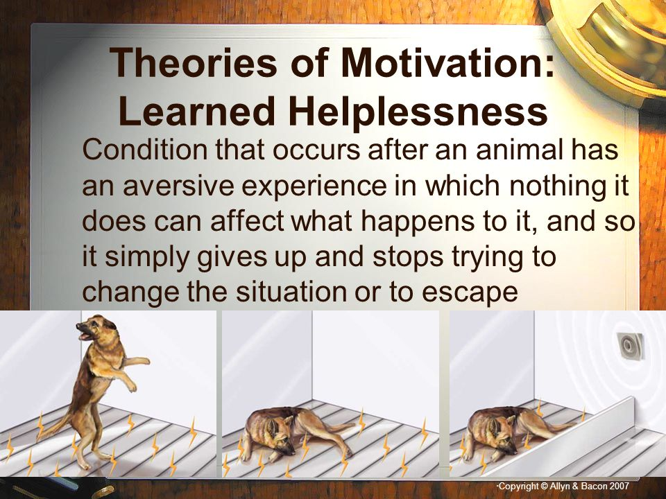 """"""" Copyright © Allyn & Bacon 2007 Theories of Motivation: Learned Helplessness Condition that occurs after an animal has an aversive experience in whic"""