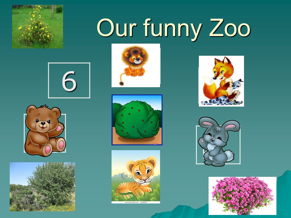 Our funny Zoo 6 2 A bear A tiger 1 A hare