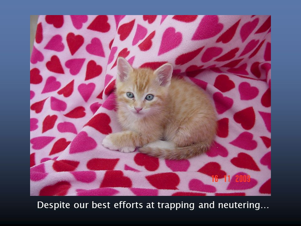 Despite our best efforts at trapping and neutering…