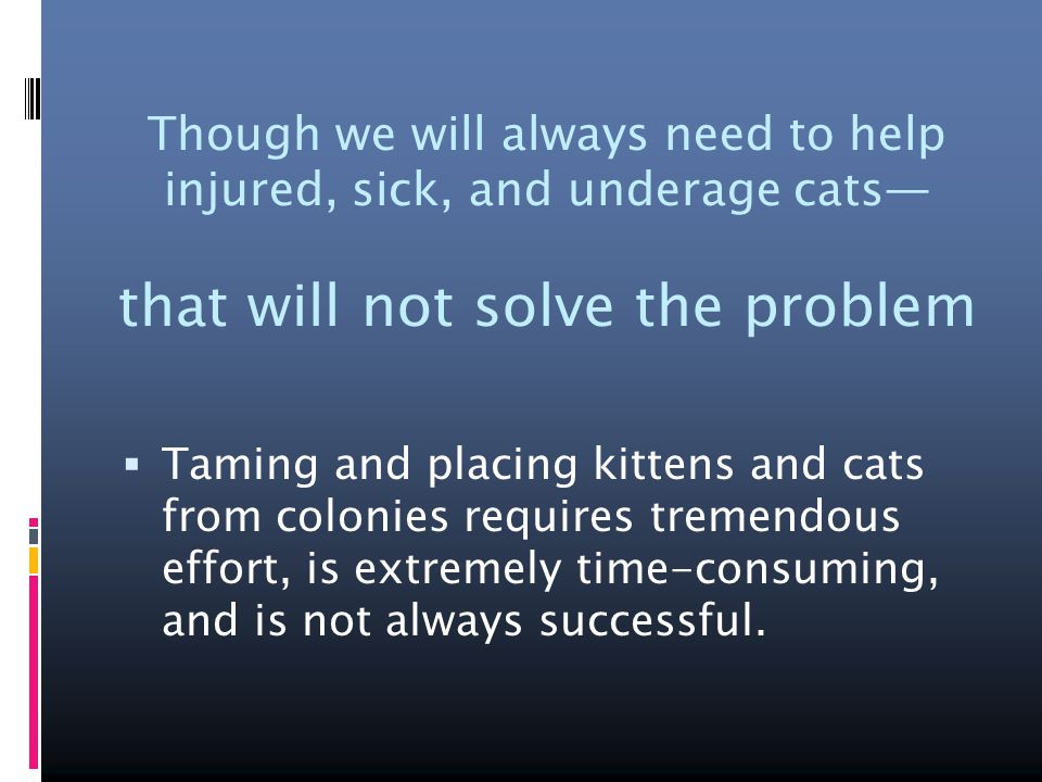 Though we will always need to help injured, sick, and underage cats— that will not solve the problem  Taming and placing kittens and cats from colonies requires tremendous effort, is extremely time-consuming, and is not always successful.