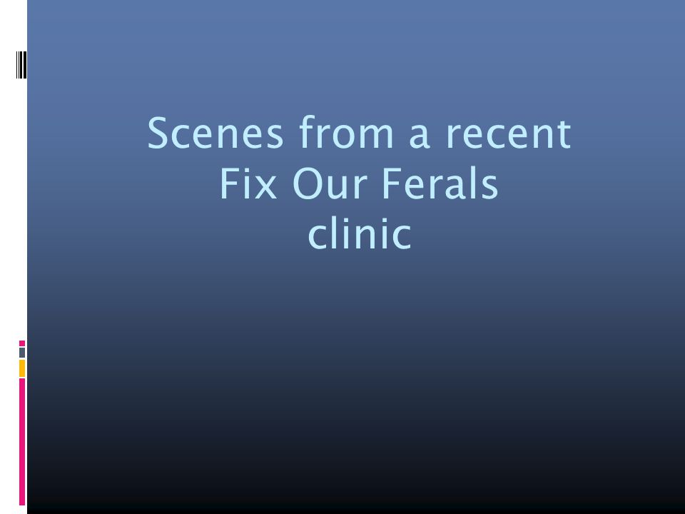 Scenes from a recent Fix Our Ferals clinic