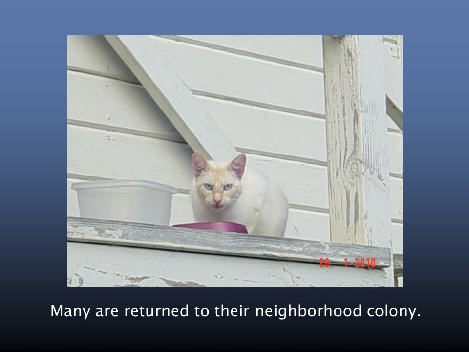 Many are returned to their neighborhood colony.