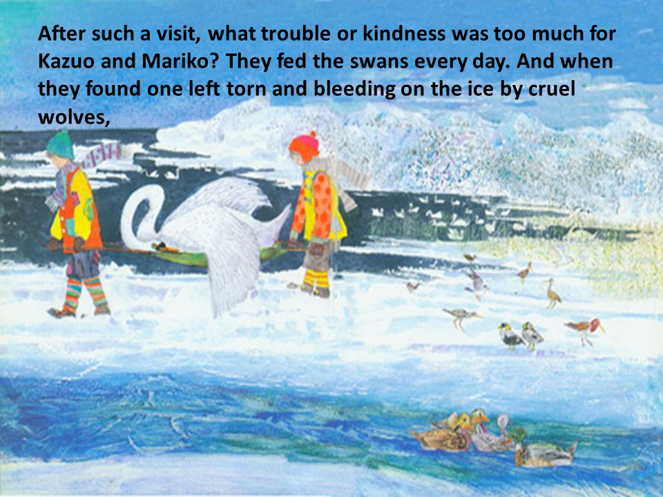 After such a visit, what trouble or kindness was too much for Kazuo and Mariko? They fed the swans every day. And when they found one left torn and bl
