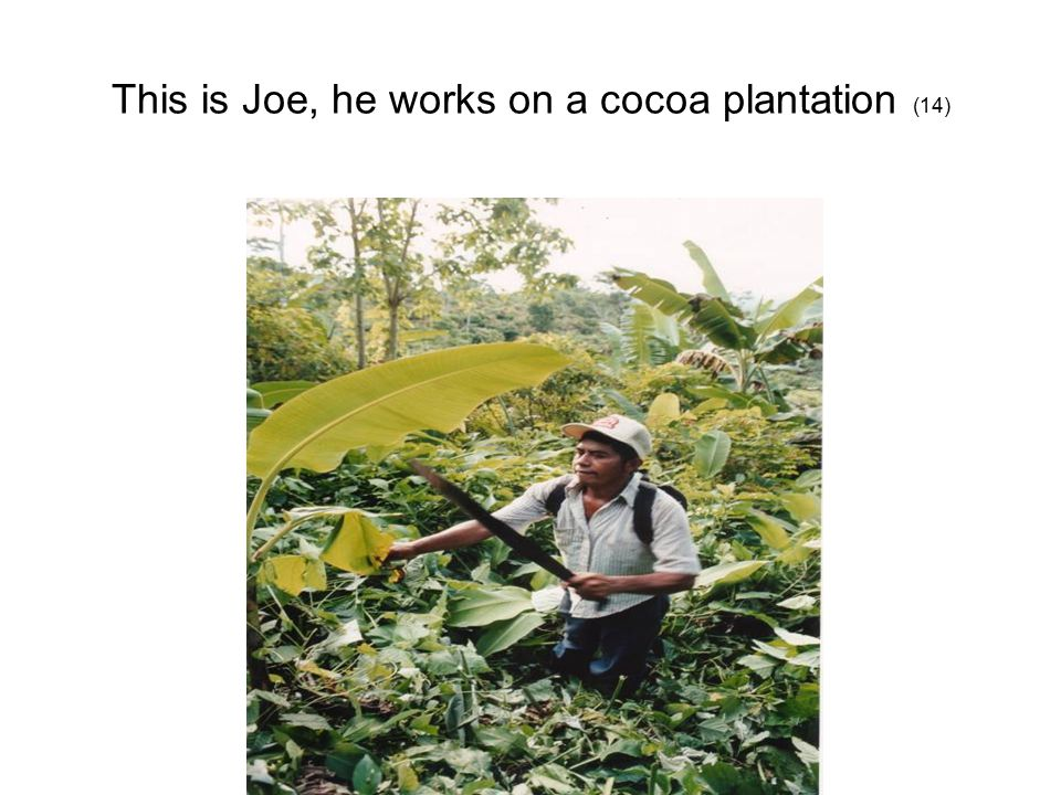 This is Joe, he works on a cocoa plantation (14)