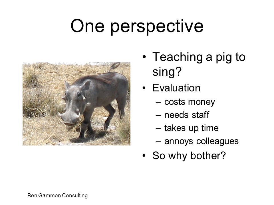 Ben Gammon Consulting One perspective Teaching a pig to sing.