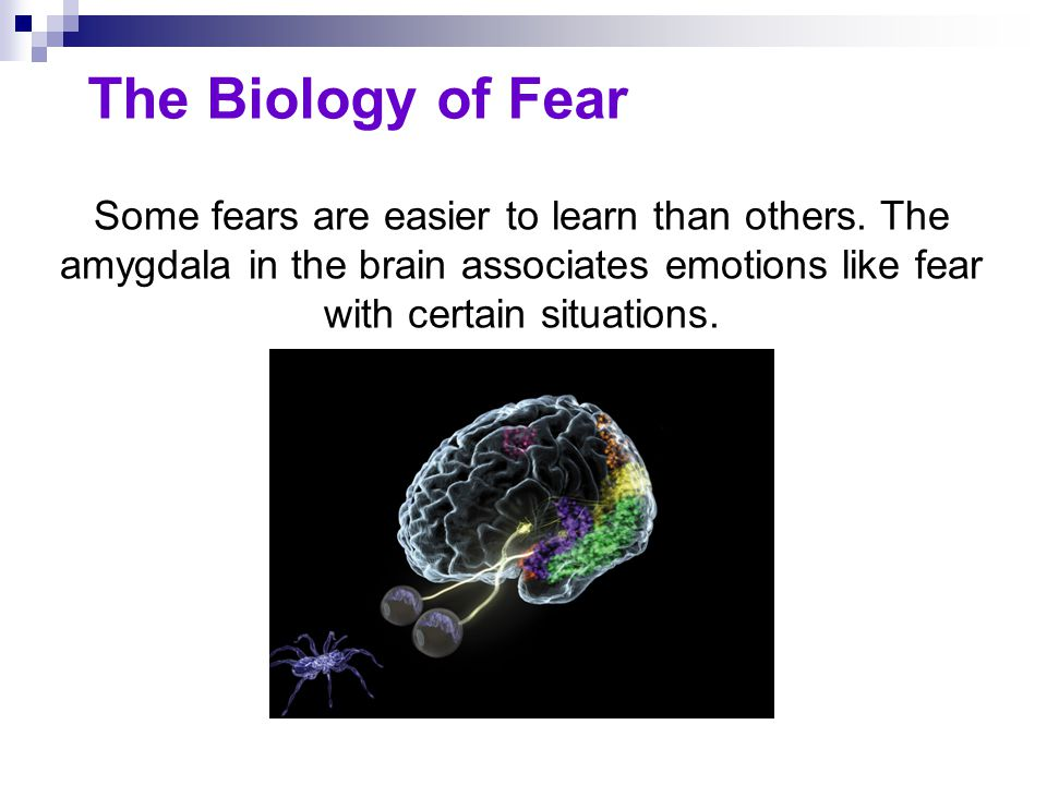 The Biology of Fear The amygdala plays a key role in associating various emotions, including fear, with certain situations.