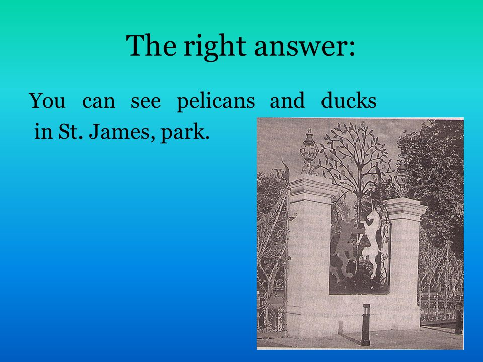 The right answer: You can see pelicans and ducks in St. James, park.