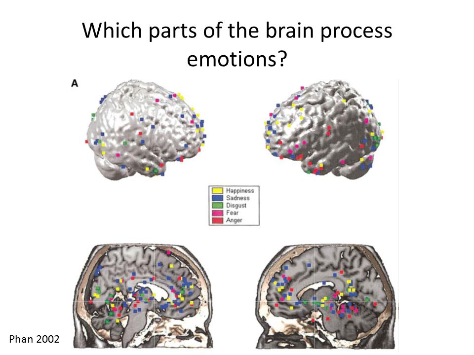 Which parts of the brain process emotions? Phan 2002
