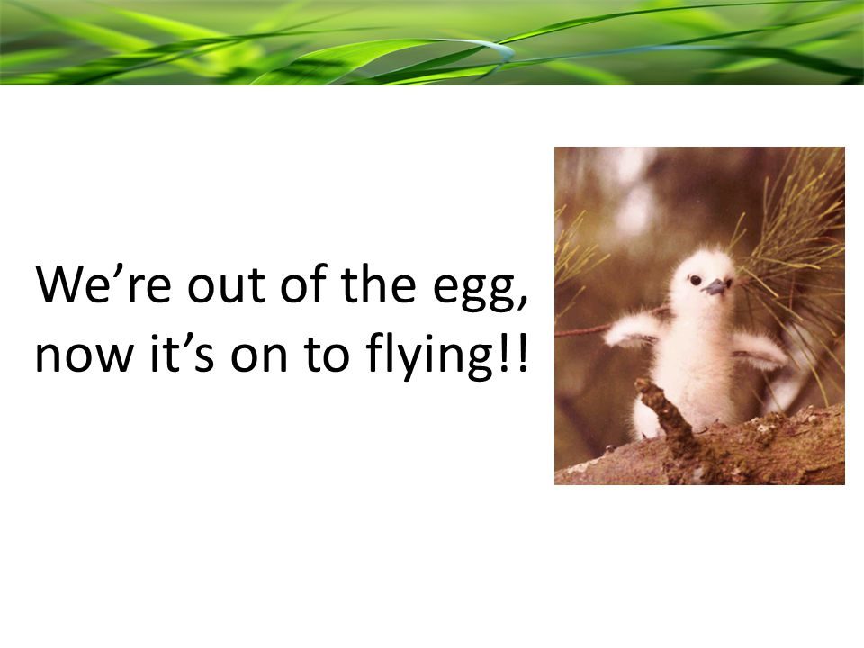 We're out of the egg, now it's on to flying!!