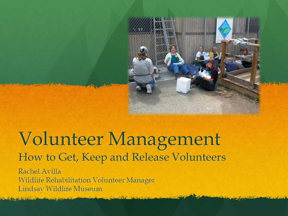 Volunteer Management How to Get, Keep and Release Volunteers Rachel Avilla Wildlife Rehabilitation Volunteer Manager Lindsay Wildlife Museum
