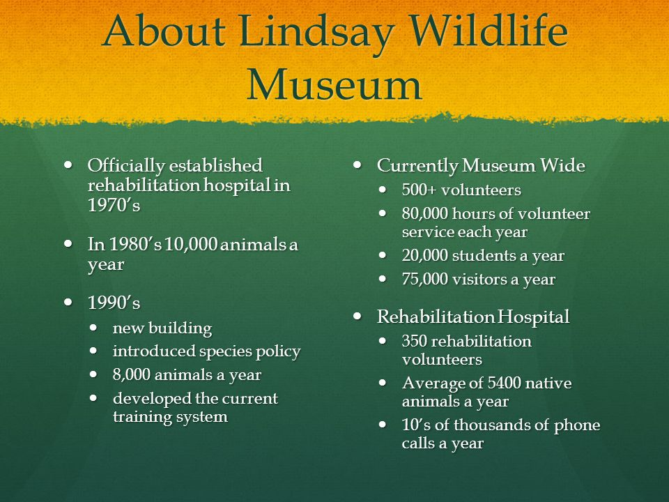 About Lindsay Wildlife Museum Officially established rehabilitation hospital in 1970's Officially established rehabilitation hospital in 1970's In 198
