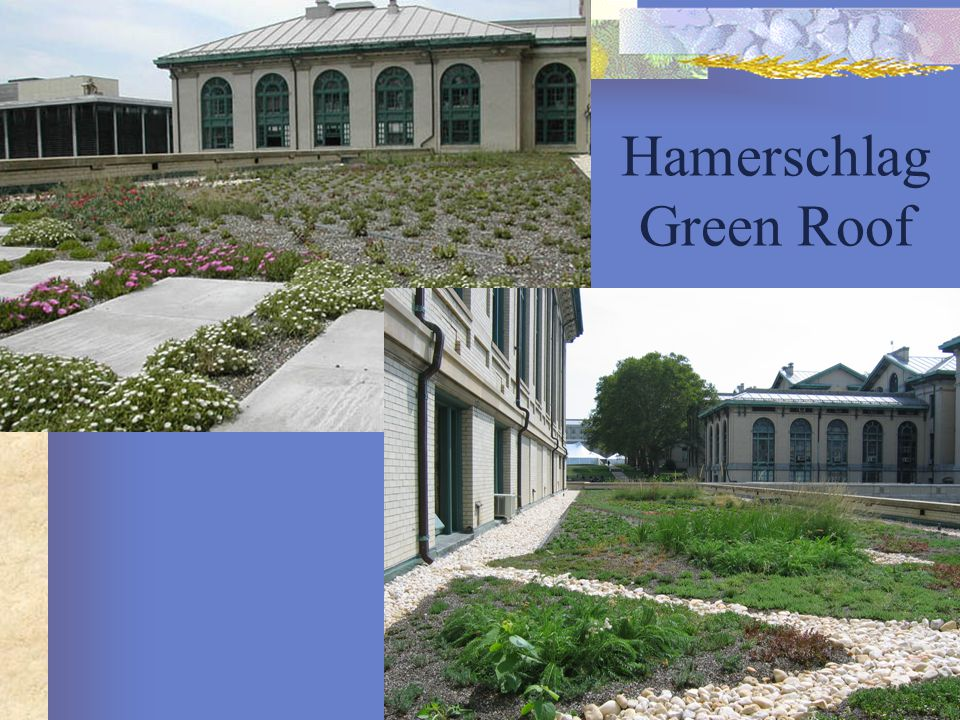 Hamerschlag Green Roof