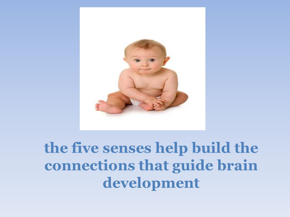 the five senses help build the connections that guide brain development
