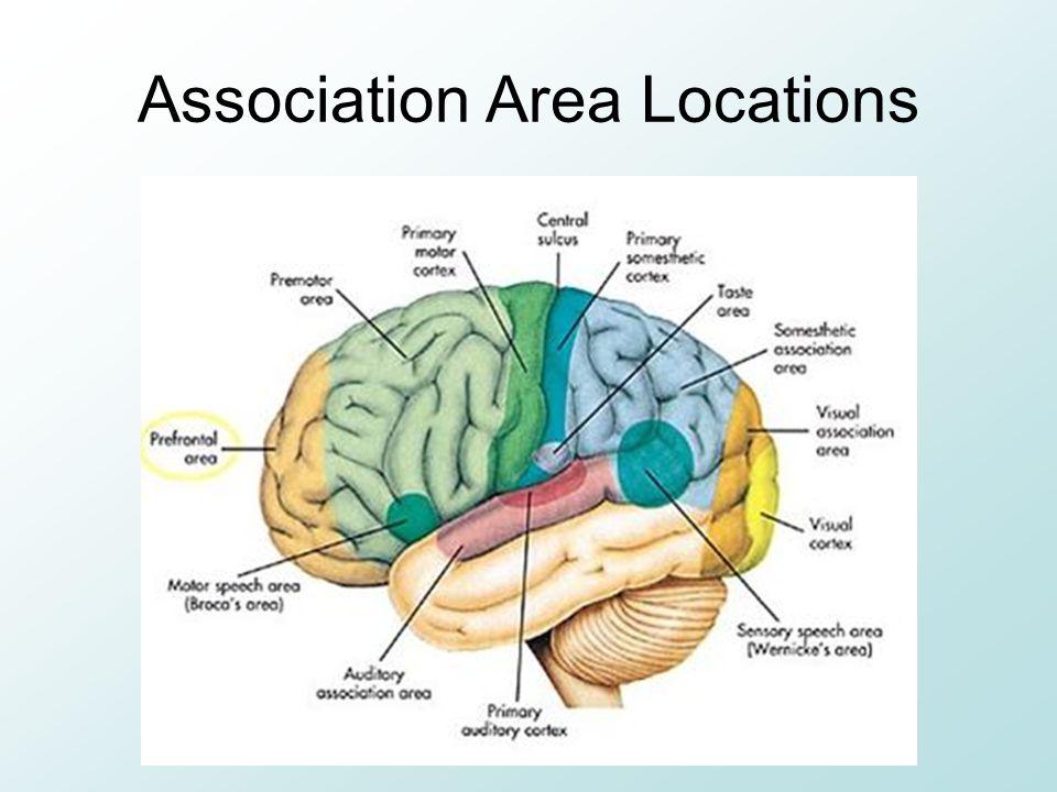 Association Area Locations