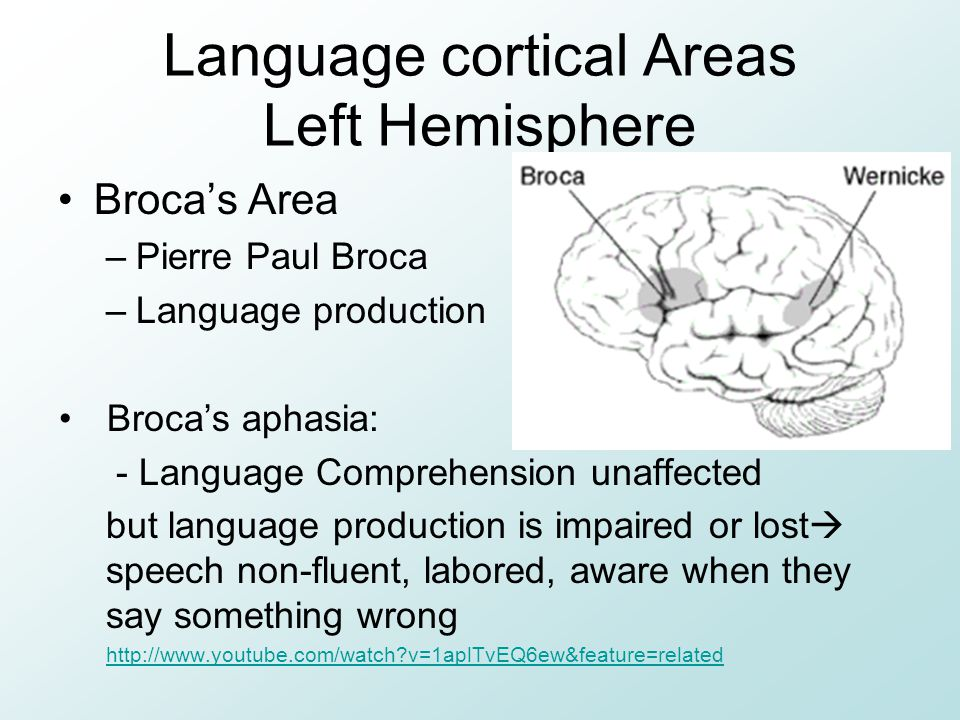 Language cortical Areas Left Hemisphere Broca's Area –Pierre Paul Broca –Language production Broca's aphasia: - Language Comprehension unaffected but language production is impaired or lost  speech non-fluent, labored, aware when they say something wrong http://www.youtube.com/watch?v=1aplTvEQ6ew&feature=related