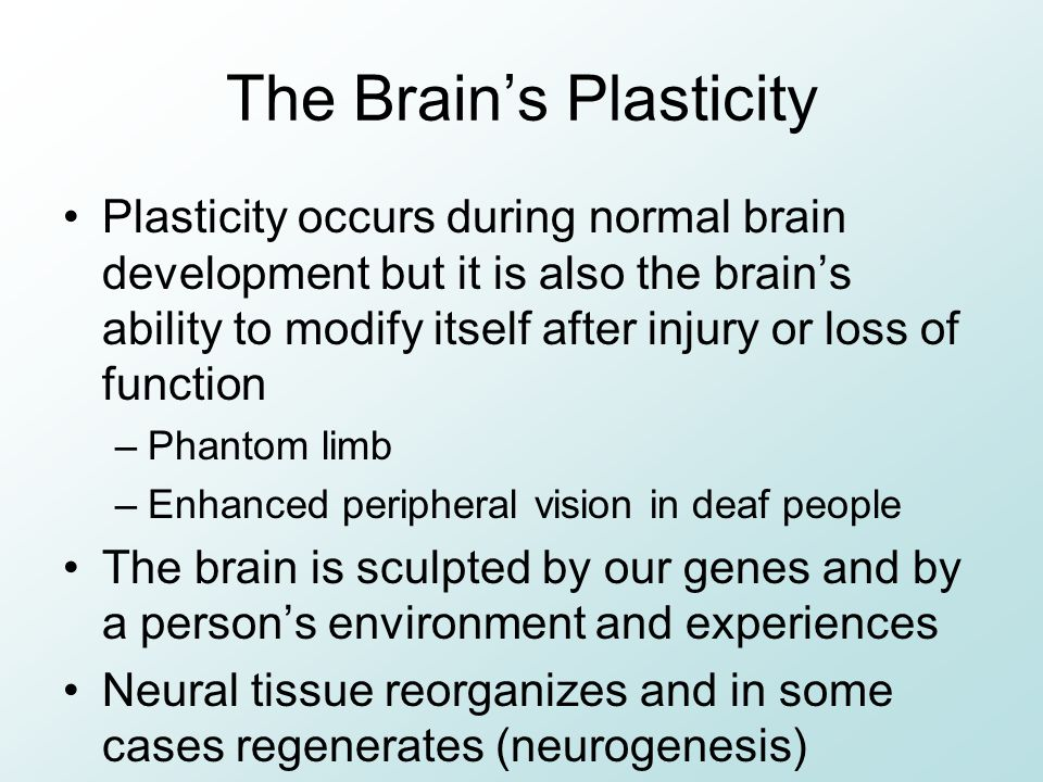 The Brain's Plasticity Plasticity occurs during normal brain development but it is also the brain's ability to modify itself after injury or loss of function –Phantom limb –Enhanced peripheral vision in deaf people The brain is sculpted by our genes and by a person's environment and experiences Neural tissue reorganizes and in some cases regenerates (neurogenesis)