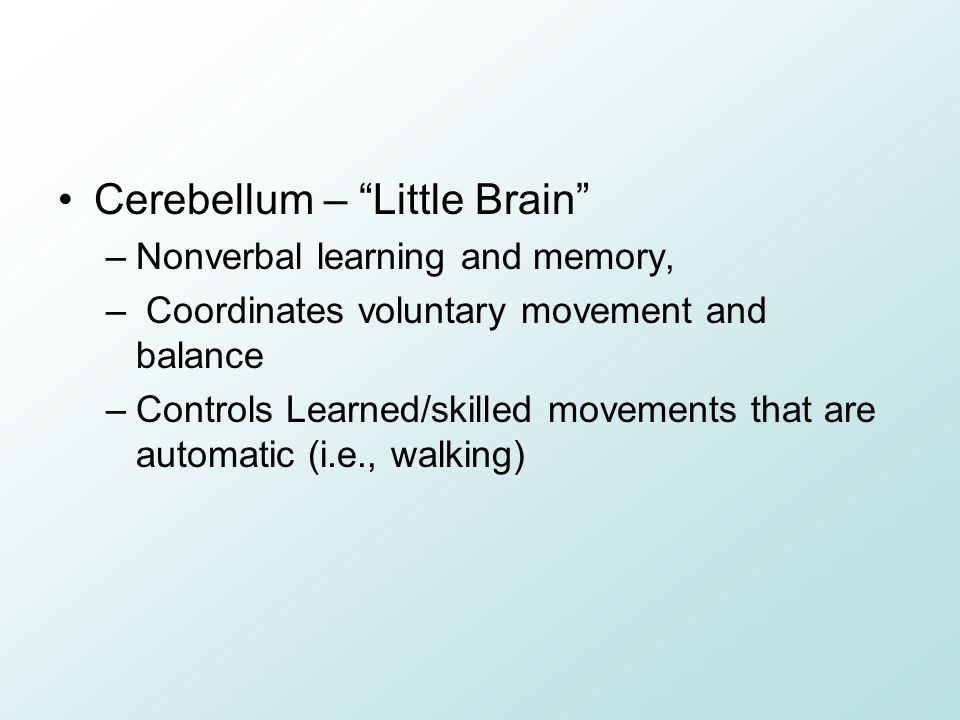 Cerebellum – Little Brain –Nonverbal learning and memory, – Coordinates voluntary movement and balance –Controls Learned/skilled movements that are automatic (i.e., walking)