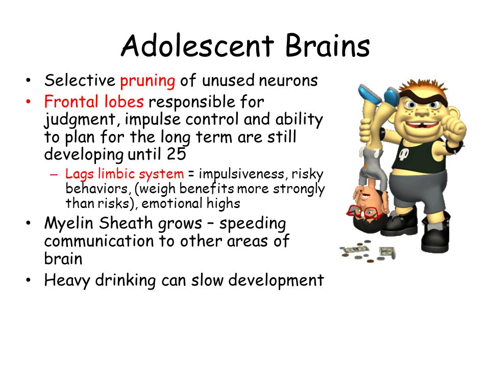 Adolescent Brains Selective pruning of unused neurons Frontal lobes responsible for judgment, impulse control and ability to plan for the long term are still developing until 25 – Lags limbic system = impulsiveness, risky behaviors, (weigh benefits more strongly than risks), emotional highs Myelin Sheath grows – speeding communication to other areas of brain Heavy drinking can slow development