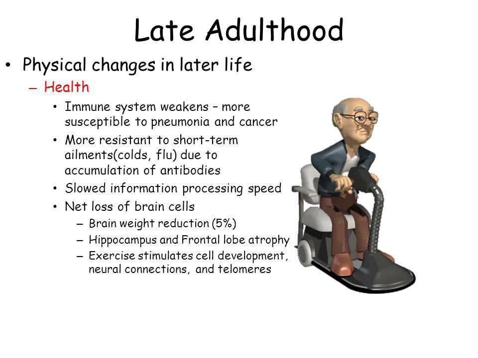 Late Adulthood Physical changes in later life – Health Immune system weakens – more susceptible to pneumonia and cancer More resistant to short-term ailments(colds, flu) due to accumulation of antibodies Slowed information processing speed Net loss of brain cells – Brain weight reduction (5%) – Hippocampus and Frontal lobe atrophy – Exercise stimulates cell development, neural connections, and telomeres