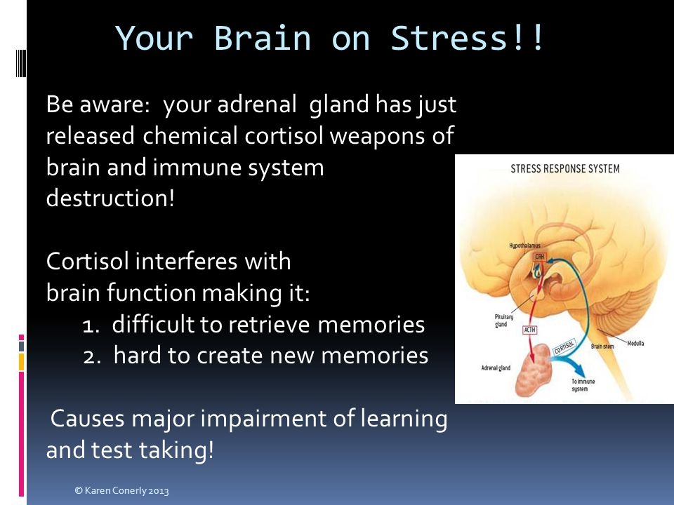 Your Brain on Stress!! Be aware: your adrenal gland has just released chemical cortisol weapons of brain and immune system destruction! Cortisol inter