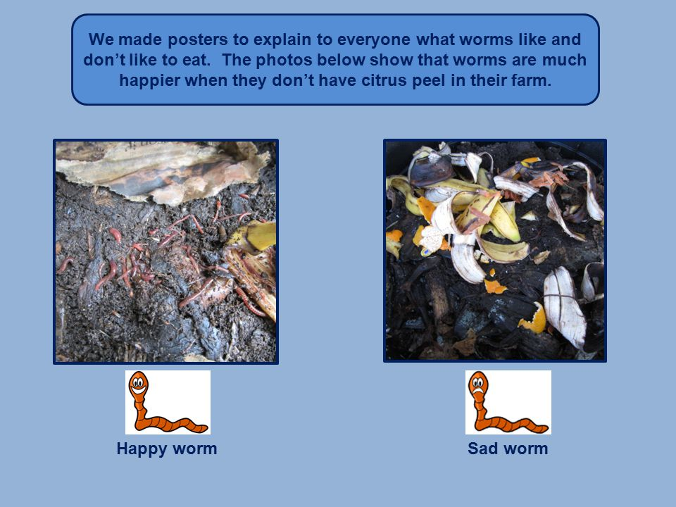 We made posters to explain to everyone what worms like and don't like to eat.