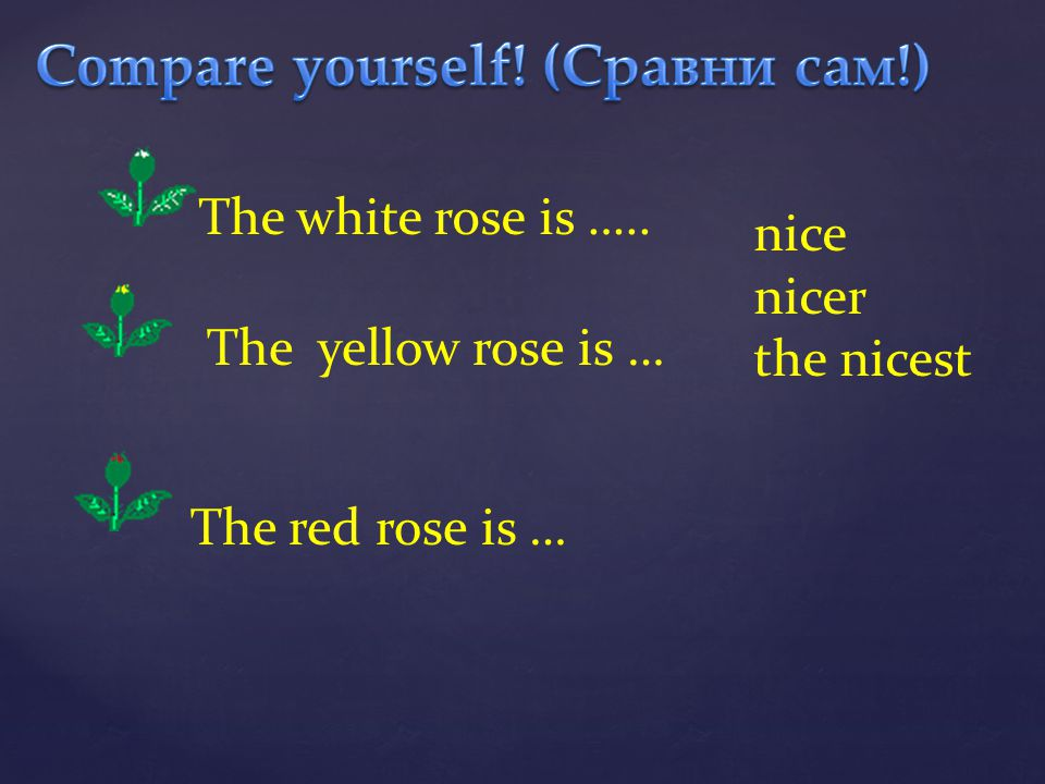 nice nicer the nicest The white rose is ….. The yellow rose is … The red rose is …